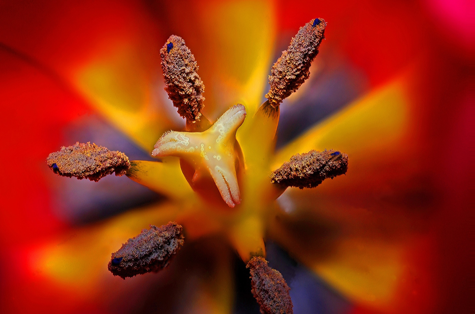 цветок, Блум, Тычинка, Опыление, Красный - Обои HD - Профессор falken.com