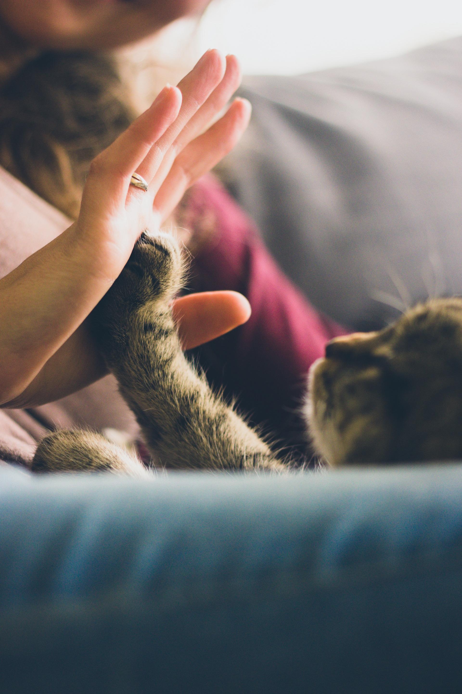 chat, femme, mains, Animal de compagnie, amour - Fonds d'écran HD - Professor-falken.com