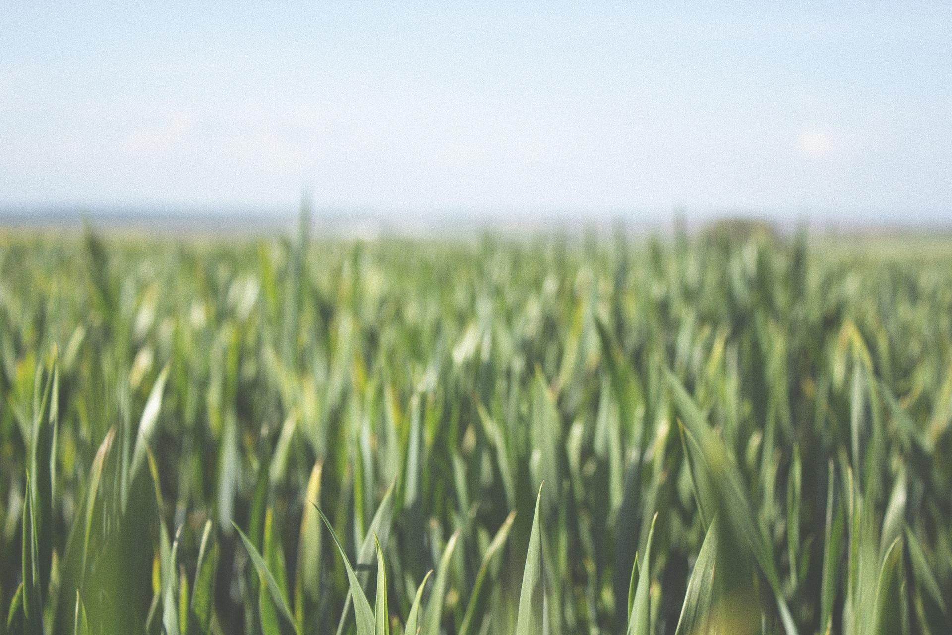 hierba, prado, cielo, relax, verde - Fondos de Pantalla HD - professor-falken.com