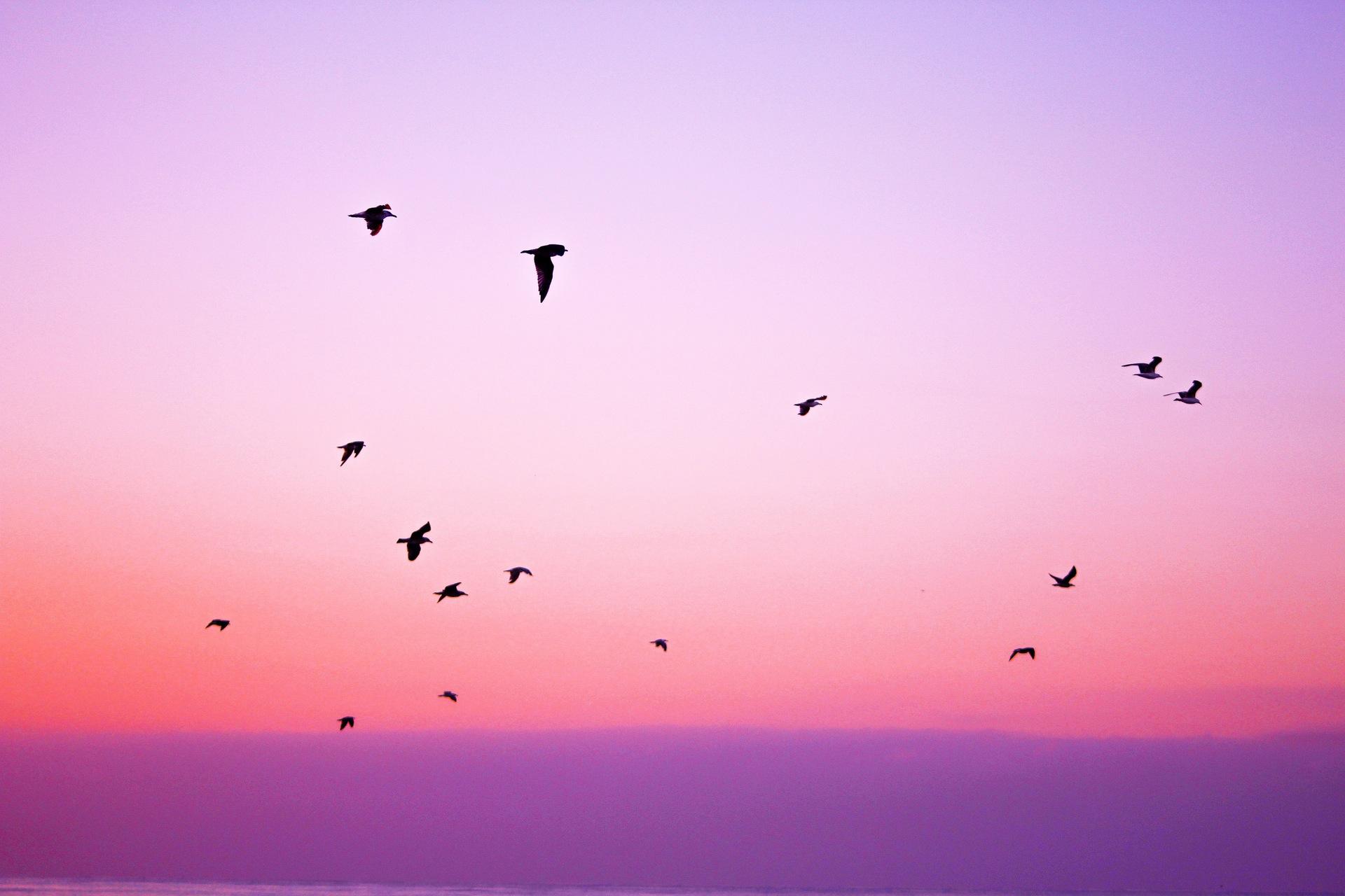 oiseaux, Sky, liberté, Rosa, Purple - Fonds d'écran HD - Professor-falken.com