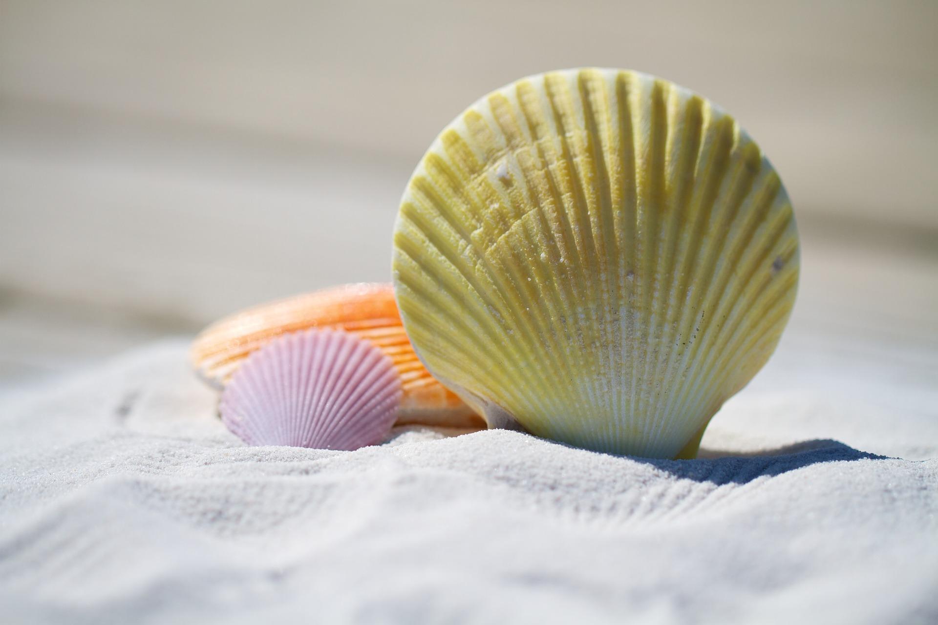 Κοχύλια, Άμμος, Παραλία, μύδια, χρώματα - Wallpapers HD - Professor-falken.com