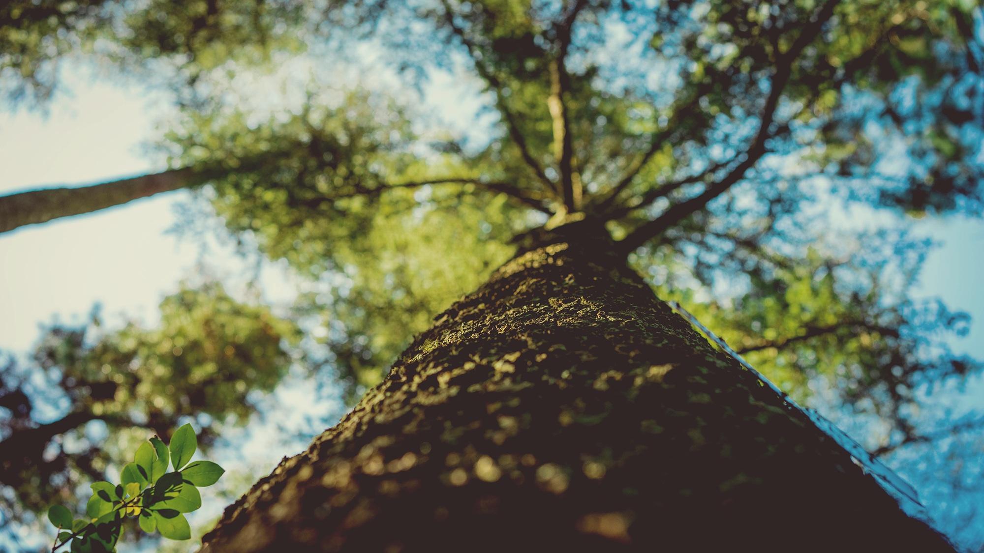 arbre, branches, tronc, feuilles, Sky, Evolution - Fonds d'écran HD - Professor-falken.com