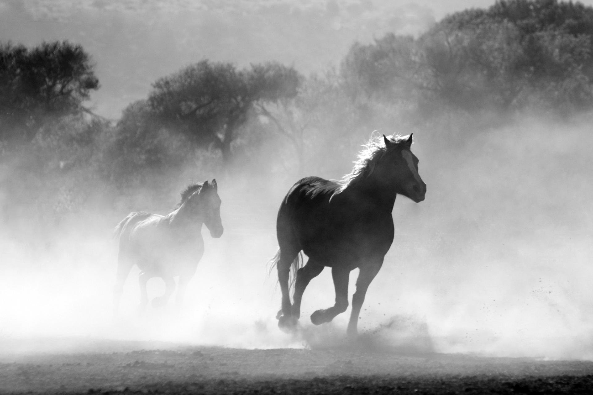 caballos, salvajes, libertad, carrera, polvo - Fondos de Pantalla HD - professor-falken.com