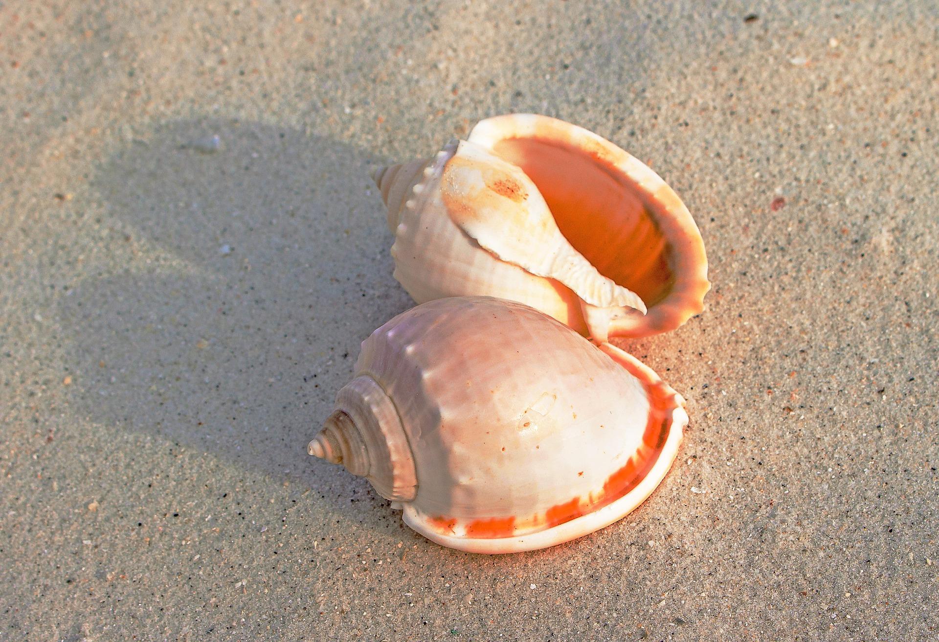 obus, sable, Plage, mollusques, Marino - Fonds d'écran HD - Professor-falken.com