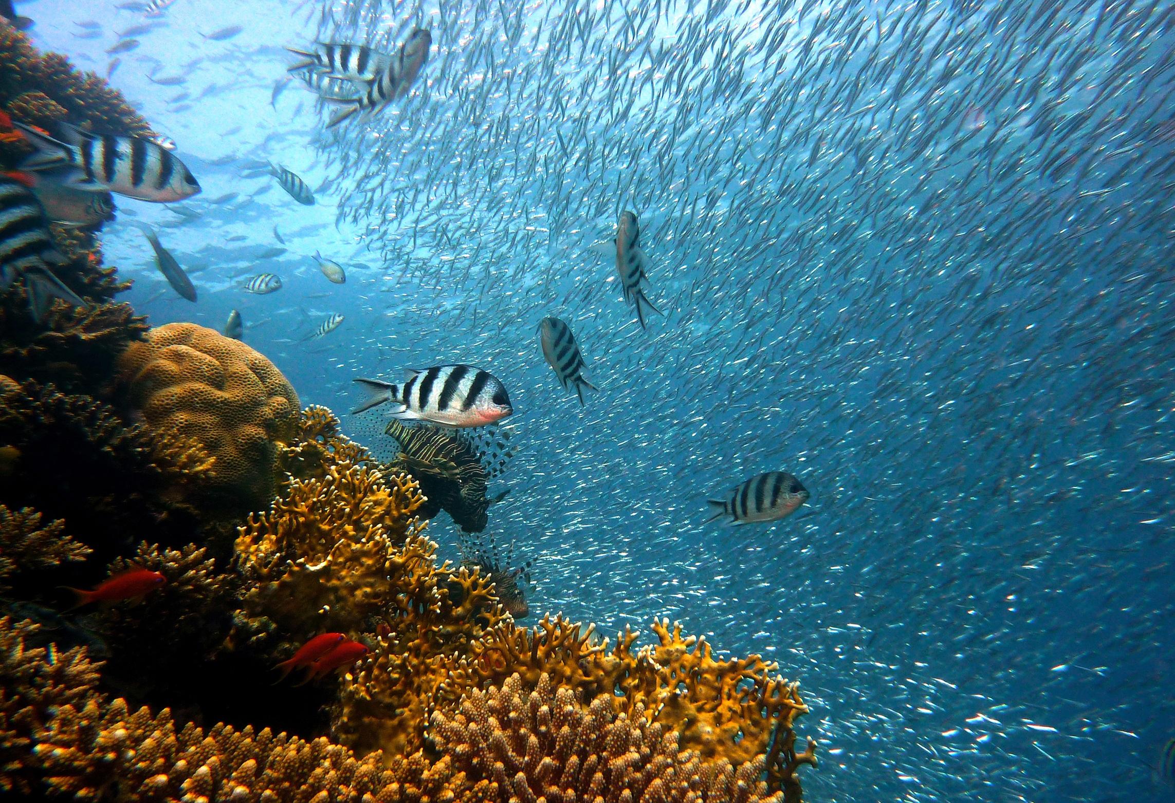 鱼, 珊瑚, 银行, 群礁, 海 - 高清壁纸 - 教授-falken.com