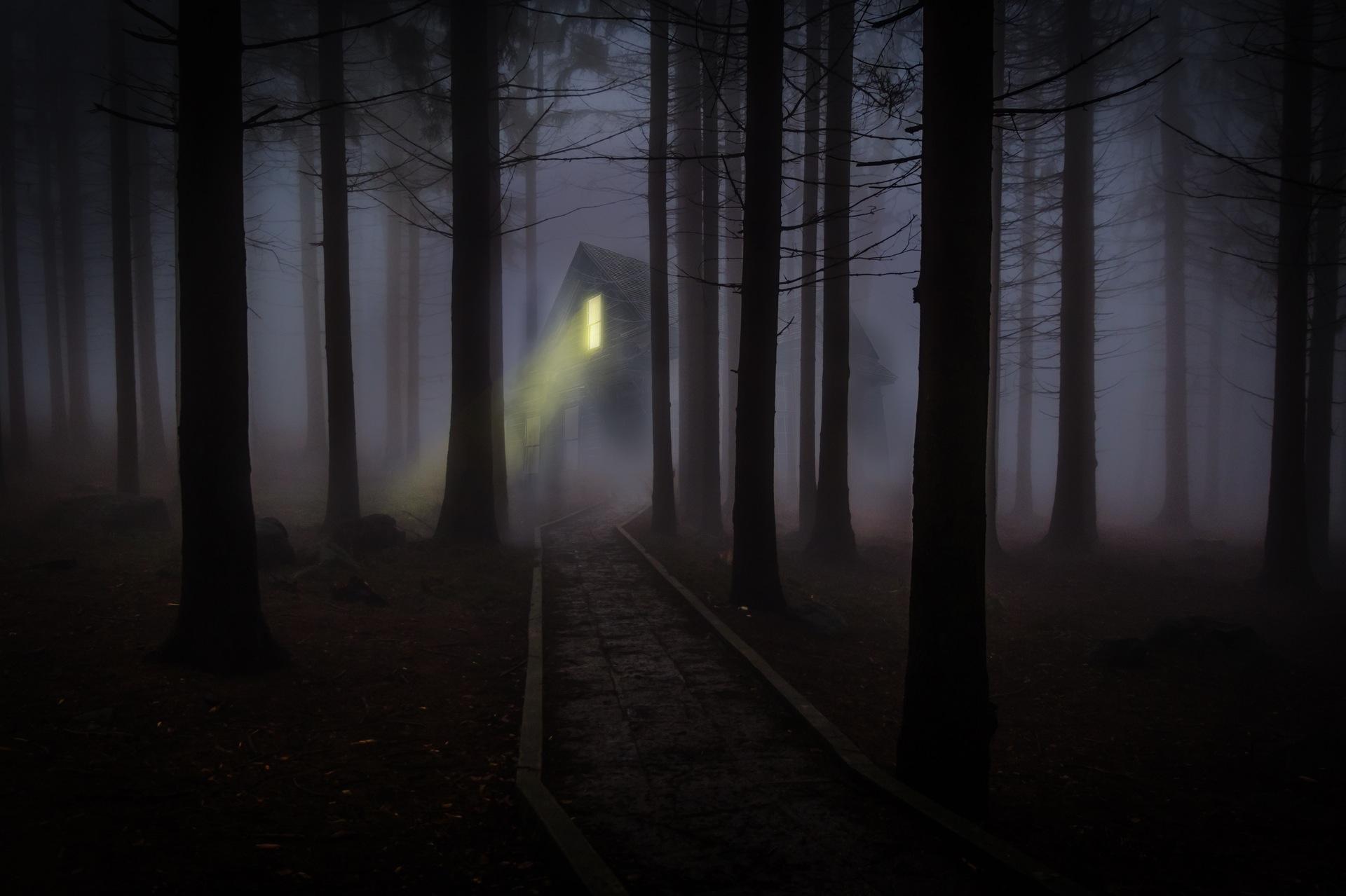 通过, 火车, 雾, 房子, 森林 - 高清壁纸 - 教授-falken.com