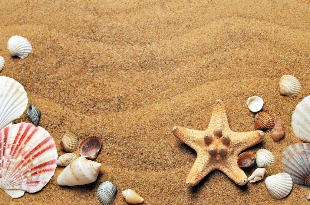 arena, conchas, estrella, mar, playa, 1608281819