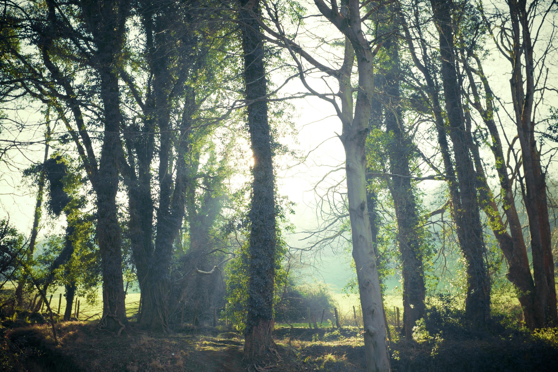 bosque, árboles, luz, maleza, relax - Fondos de Pantalla HD - professor-falken.com