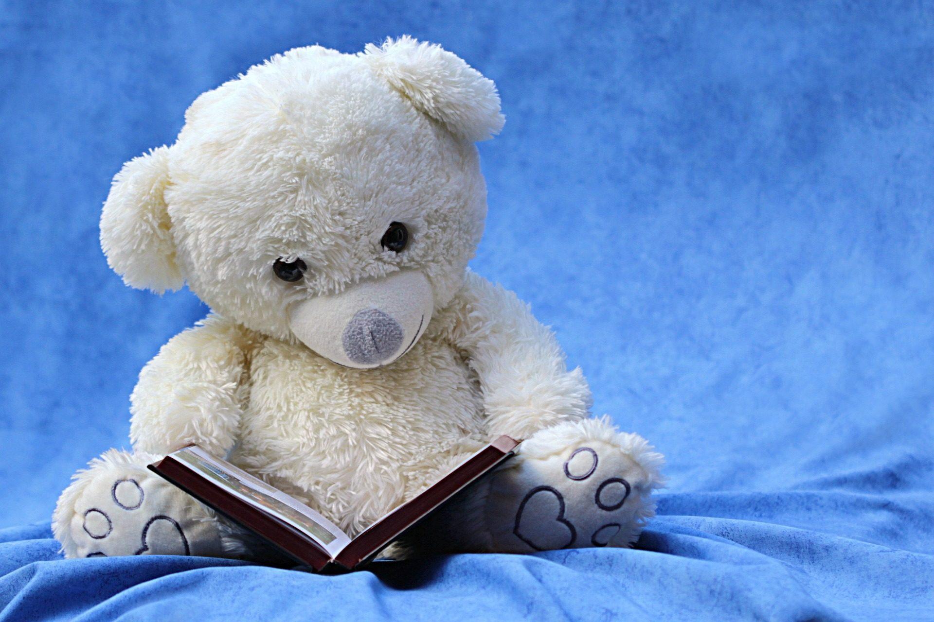 urso, Teddy, Livro, leitura, Branco - Papéis de parede HD - Professor-falken.com