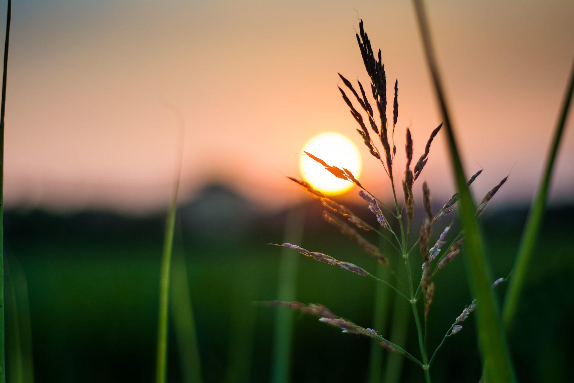 sol, brillo, atardecer, planta, verde - Fondos de Pantalla HD - professor-falken.com