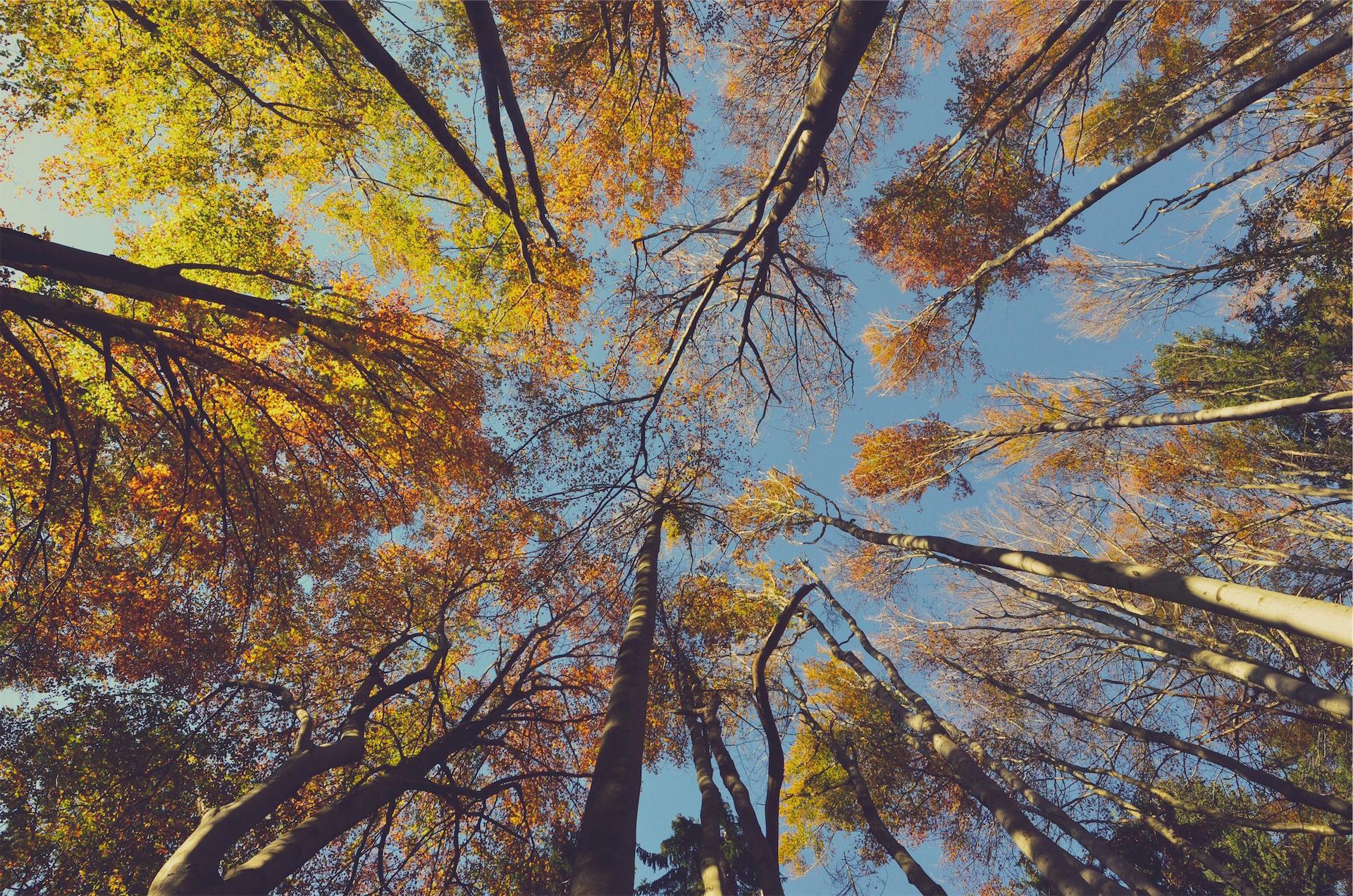 森林, 树木, copas, 天空, 高度 - 高清壁纸 - 教授-falken.com