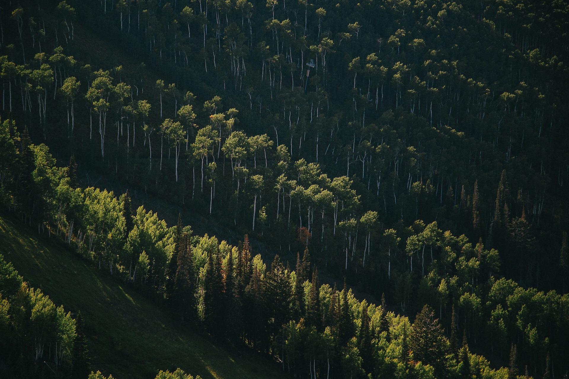 森林, 树木, 杂草, ecosistema, 绿色 - 高清壁纸 - 教授-falken.com