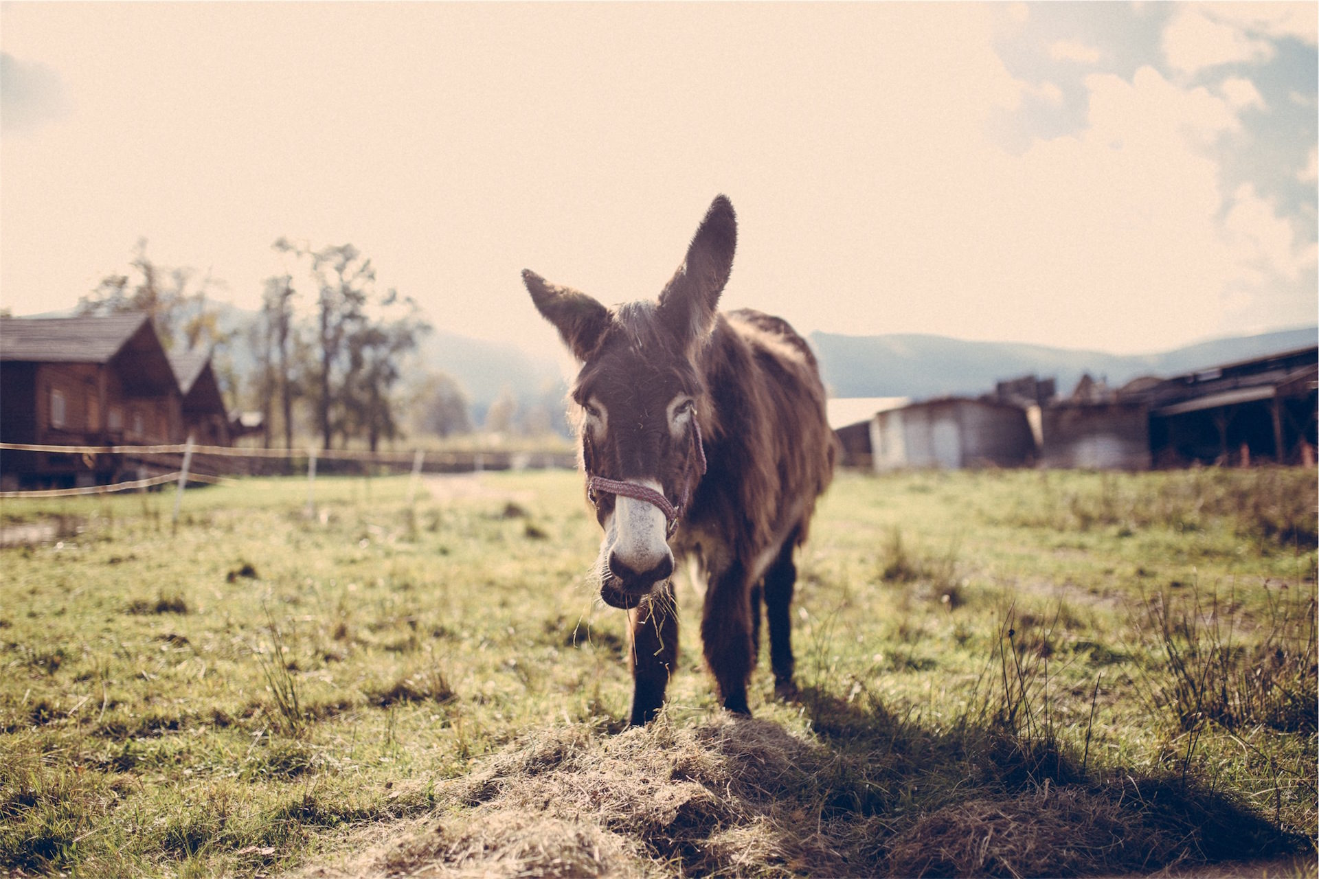 burro, asno, 累了, 食品, establo - 高清壁纸 - 教授-falken.com