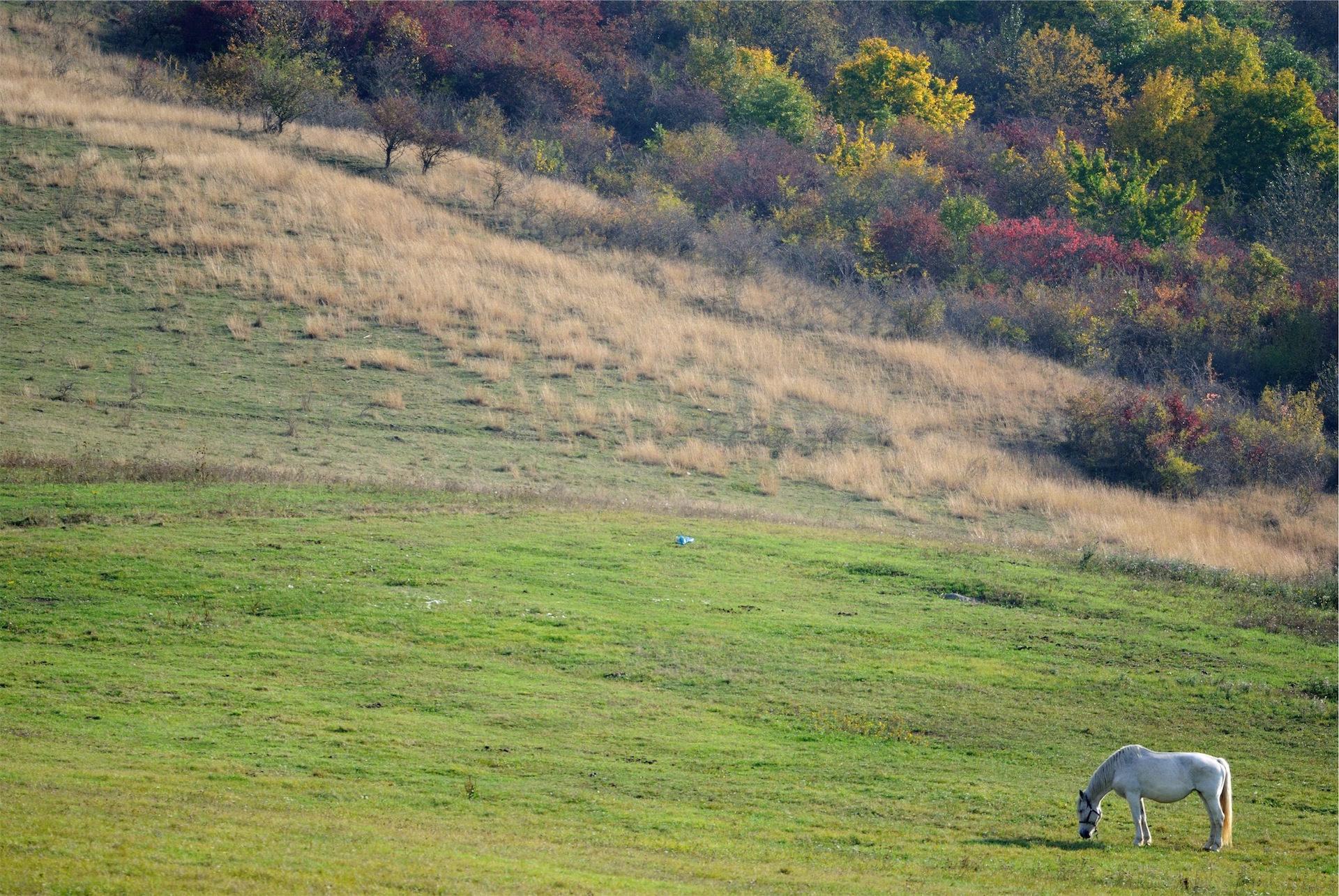 caballo, pradera, valle, lejanía, blanco - Fondos de Pantalla HD - professor-falken.com