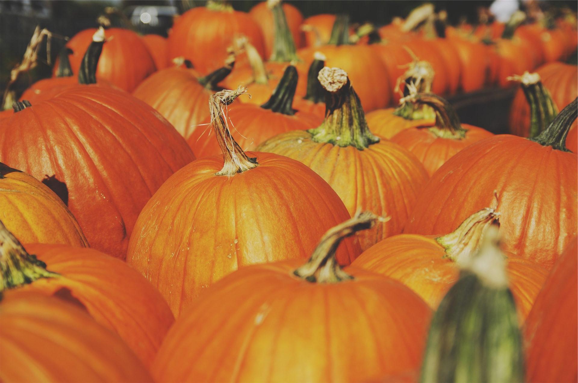 Zucche, Plantation, Agricoltura, colorato, Orange - Sfondi HD - Professor-falken.com