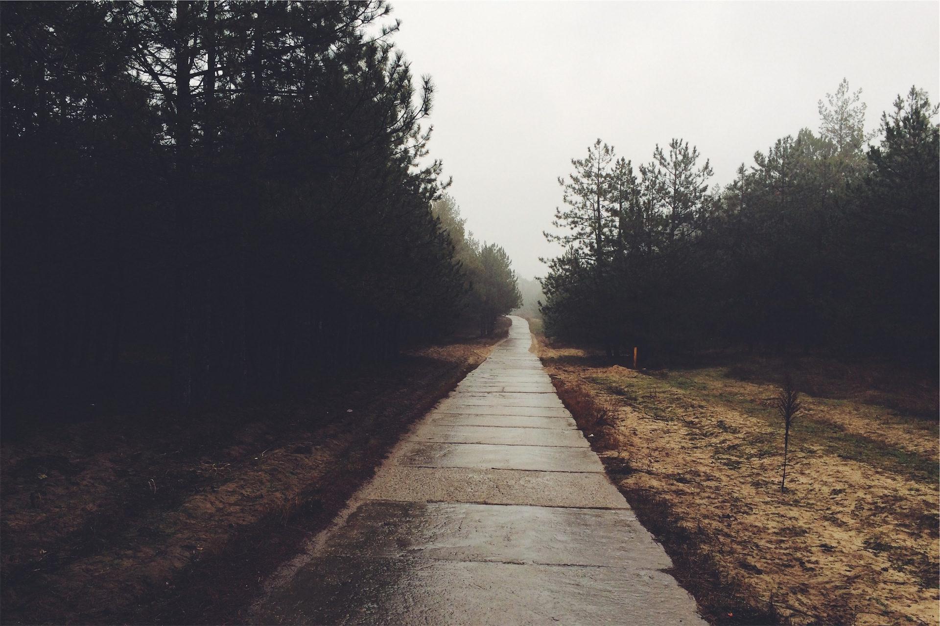 Estrada, nevoeiro, floresta, Soledad, Relaxe - Papéis de parede HD - Professor-falken.com