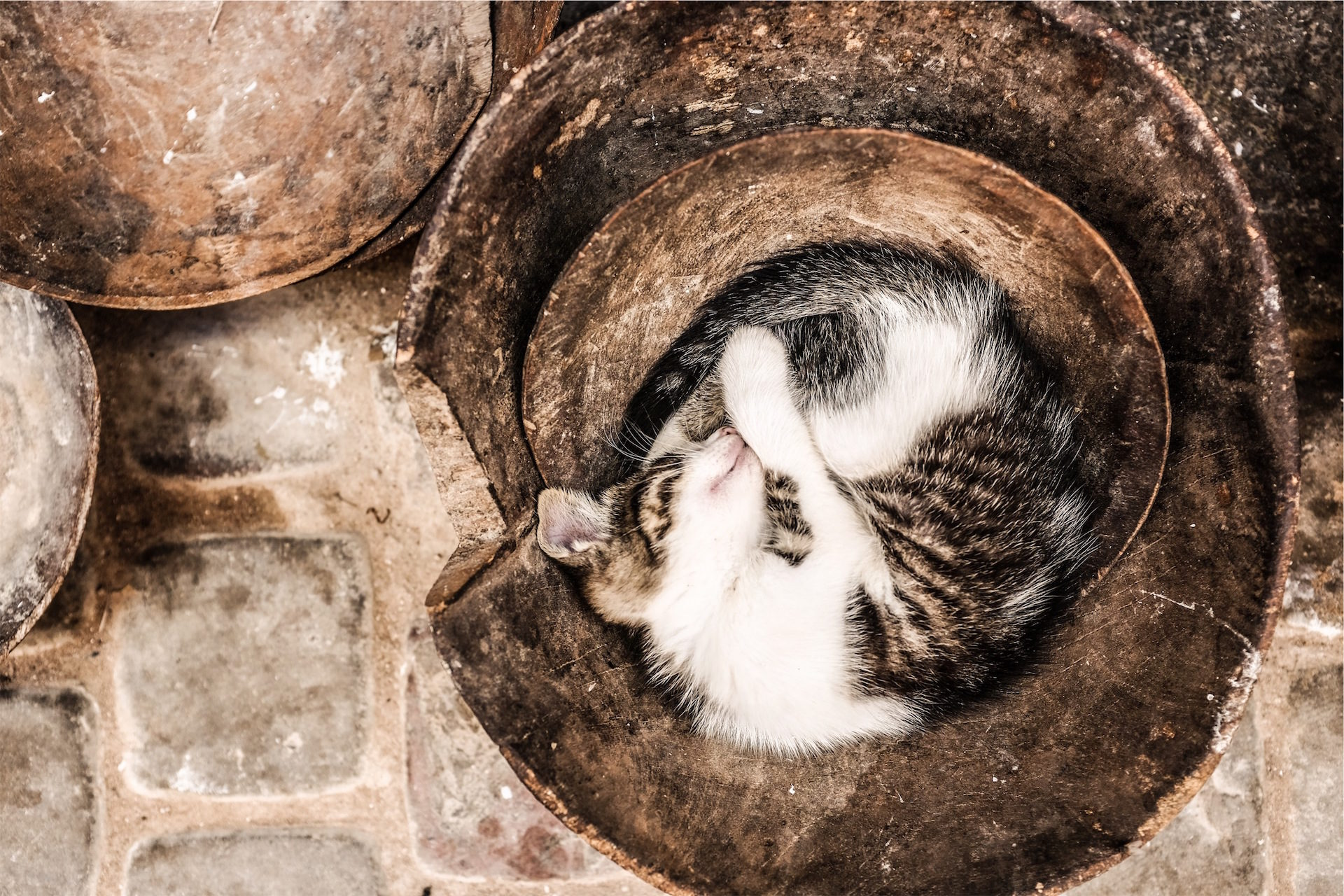 gato, sono, Animal de estimação, navio de, Mônada - Papéis de parede HD - Professor-falken.com