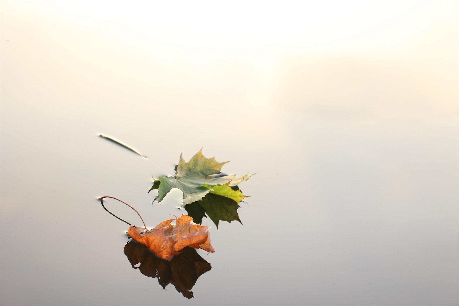 पत्ते, तालाब, झील, ग्रीन, ब्राउन - HD वॉलपेपर - प्रोफेसर-falken.com