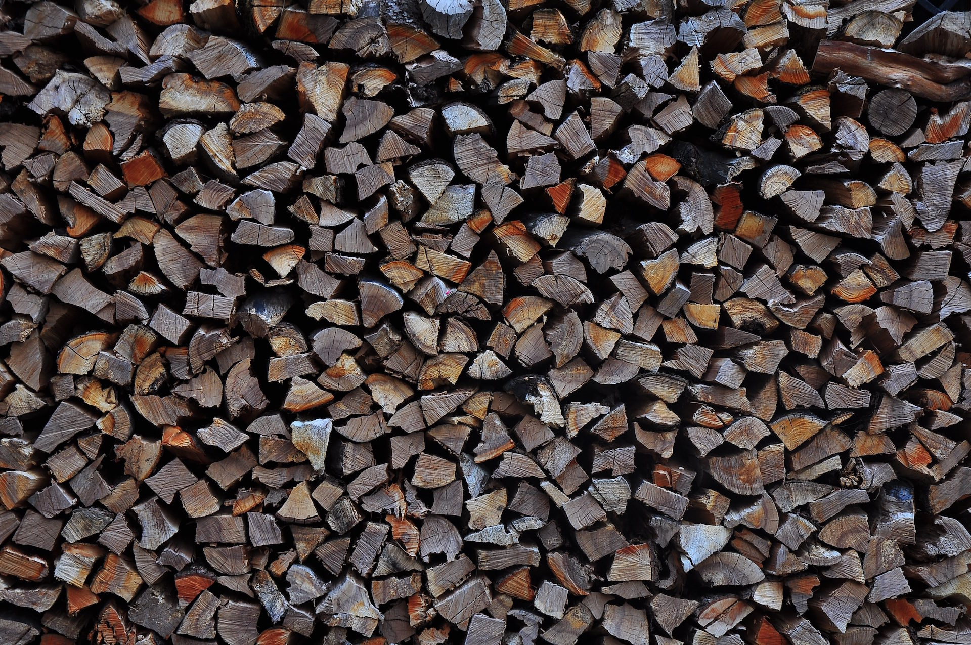 Floresta, troncos, veias, lenha, quantidade - Papéis de parede HD - Professor-falken.com