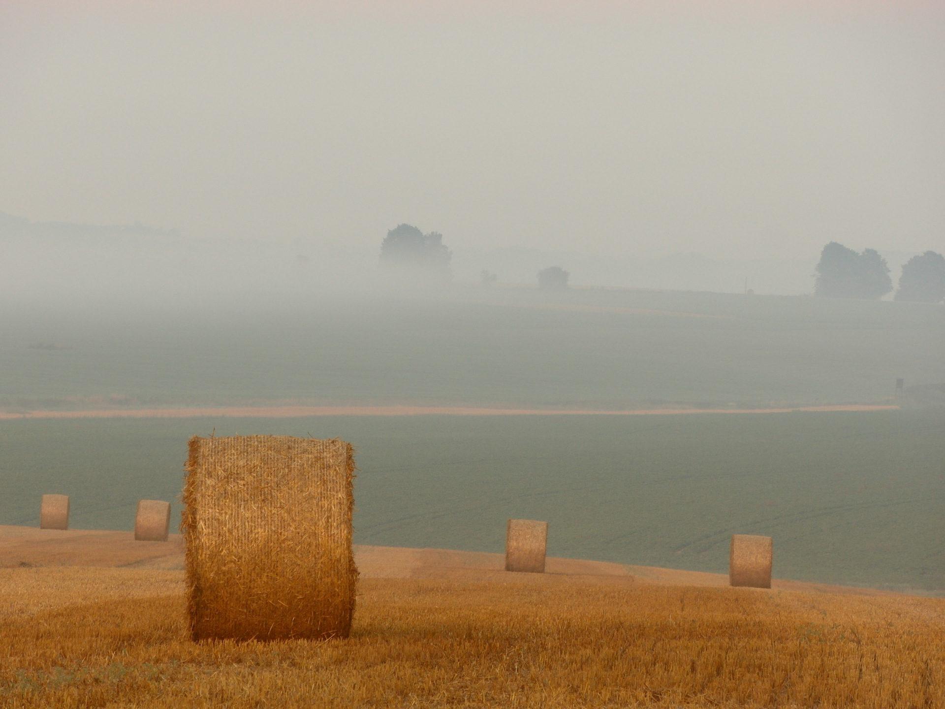 Stroh, Grass, Rulo, Pradera, Nebel - Wallpaper HD - Prof.-falken.com
