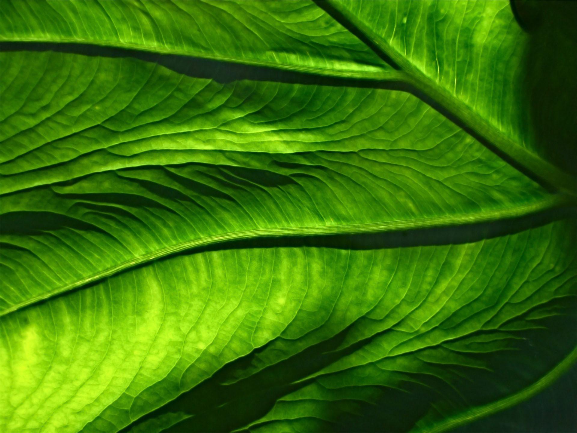 rez de chaussée, feuille, veines, Flore, Vert - Fonds d'écran HD - Professor-falken.com