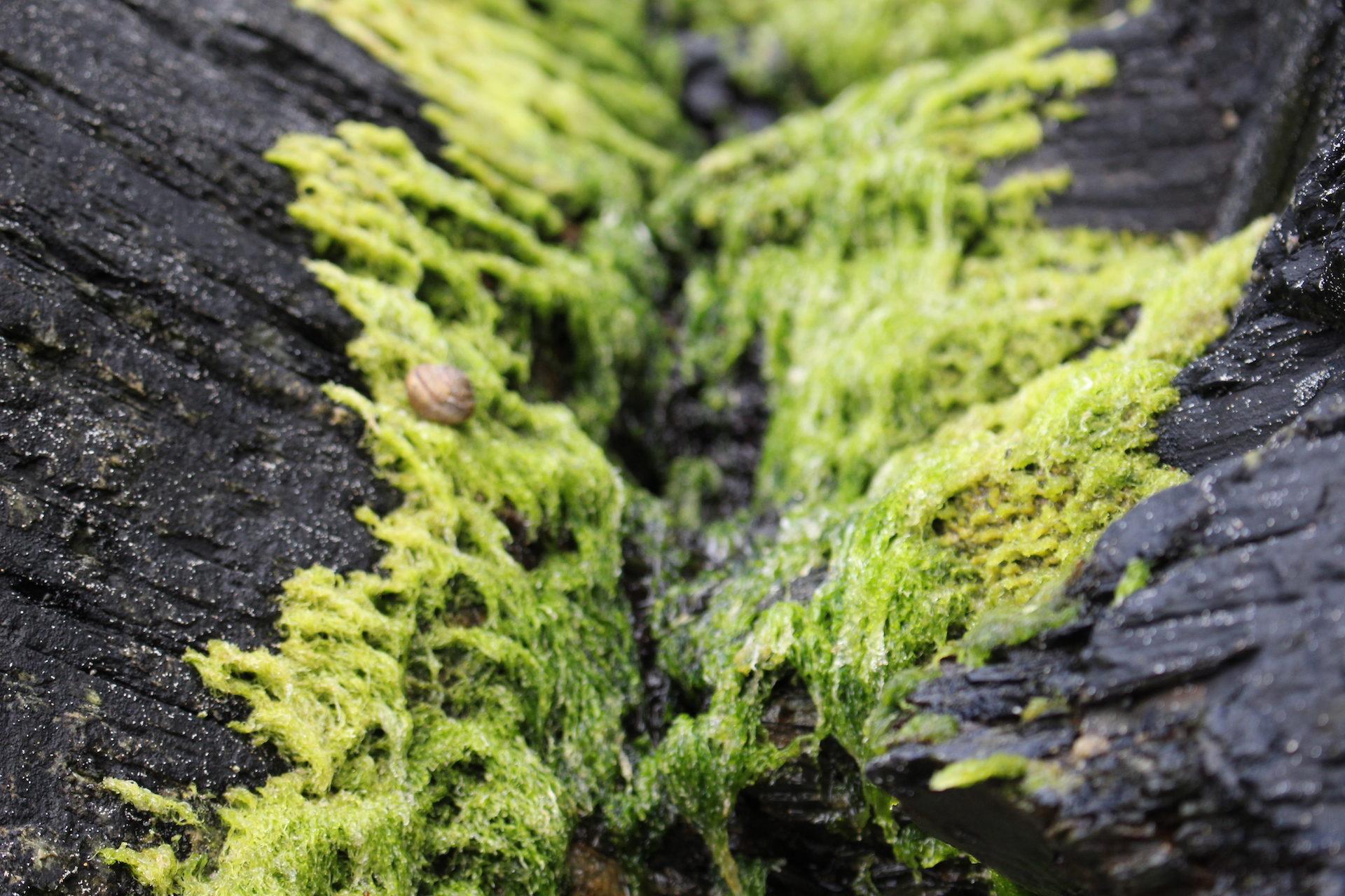 algas, piedras, caracol, playa, verde - Fondos de Pantalla HD - professor-falken.com