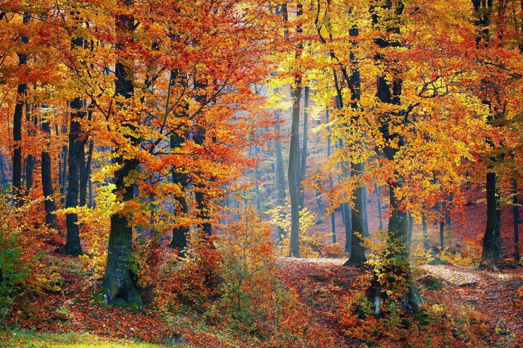 bosque, árboles, otoño, hojas, secas, 1610211538