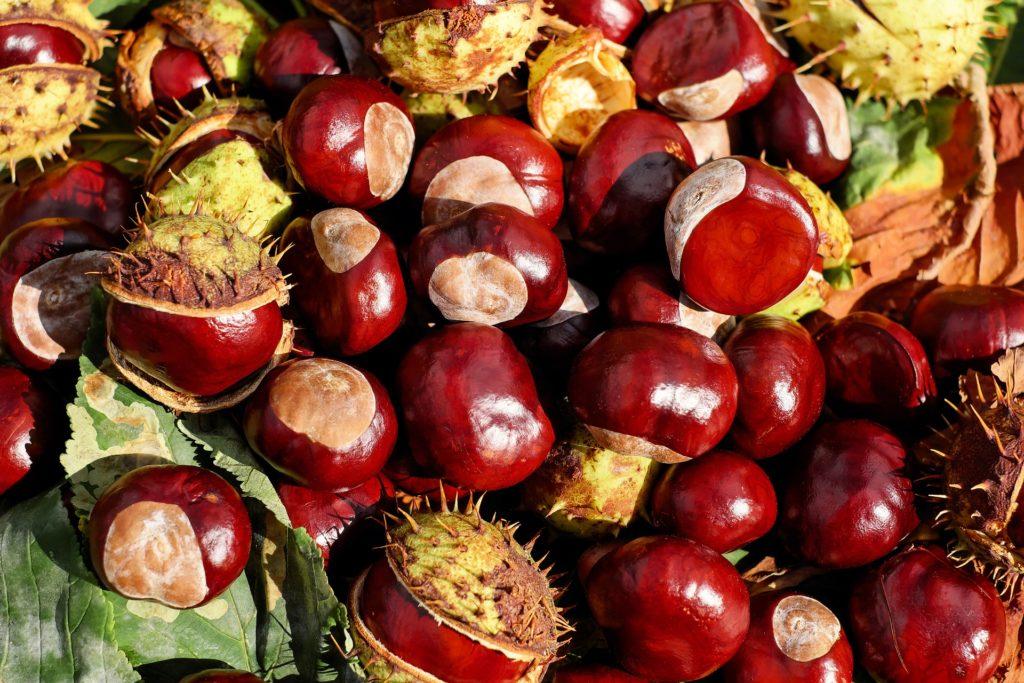castañas, frutos, brillante, cáscaras, otoño, 1610191602