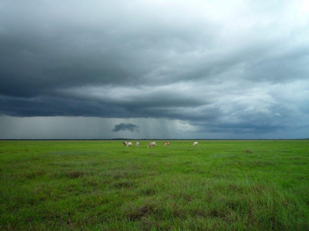 llanura, ganado, nubes, tormenta, temporal, 1610230845