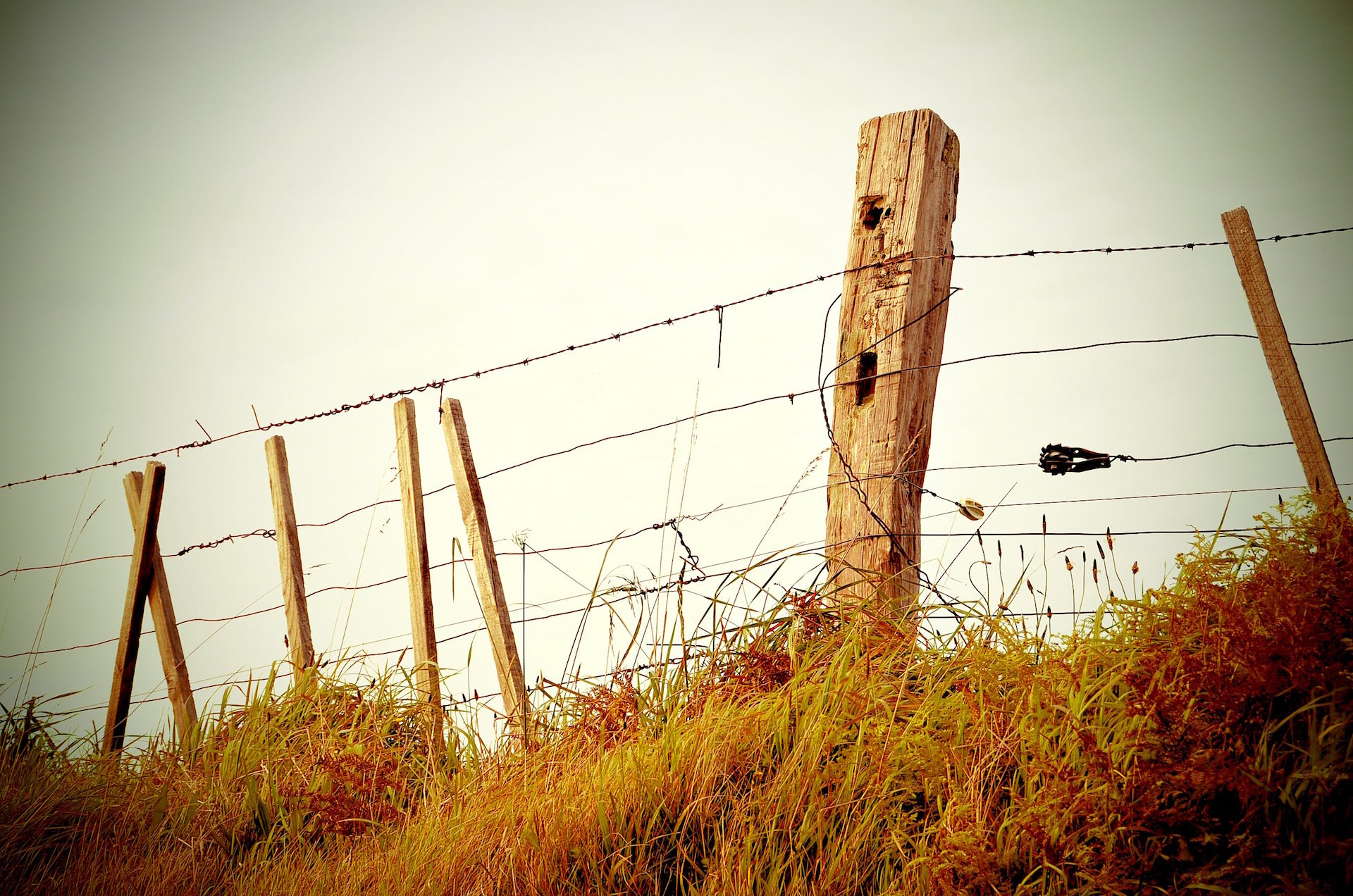 valla, cerca, alambre, roto, viejo - Fondos de Pantalla HD - professor-falken.com