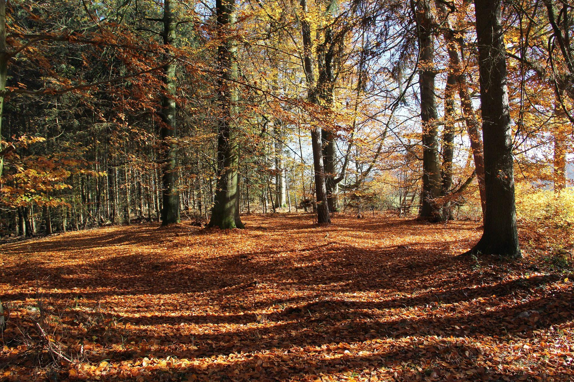 森林, 树木, 秋天, 叶子, 干, 土壤, 数量 - 高清壁纸 - 教授-falken.