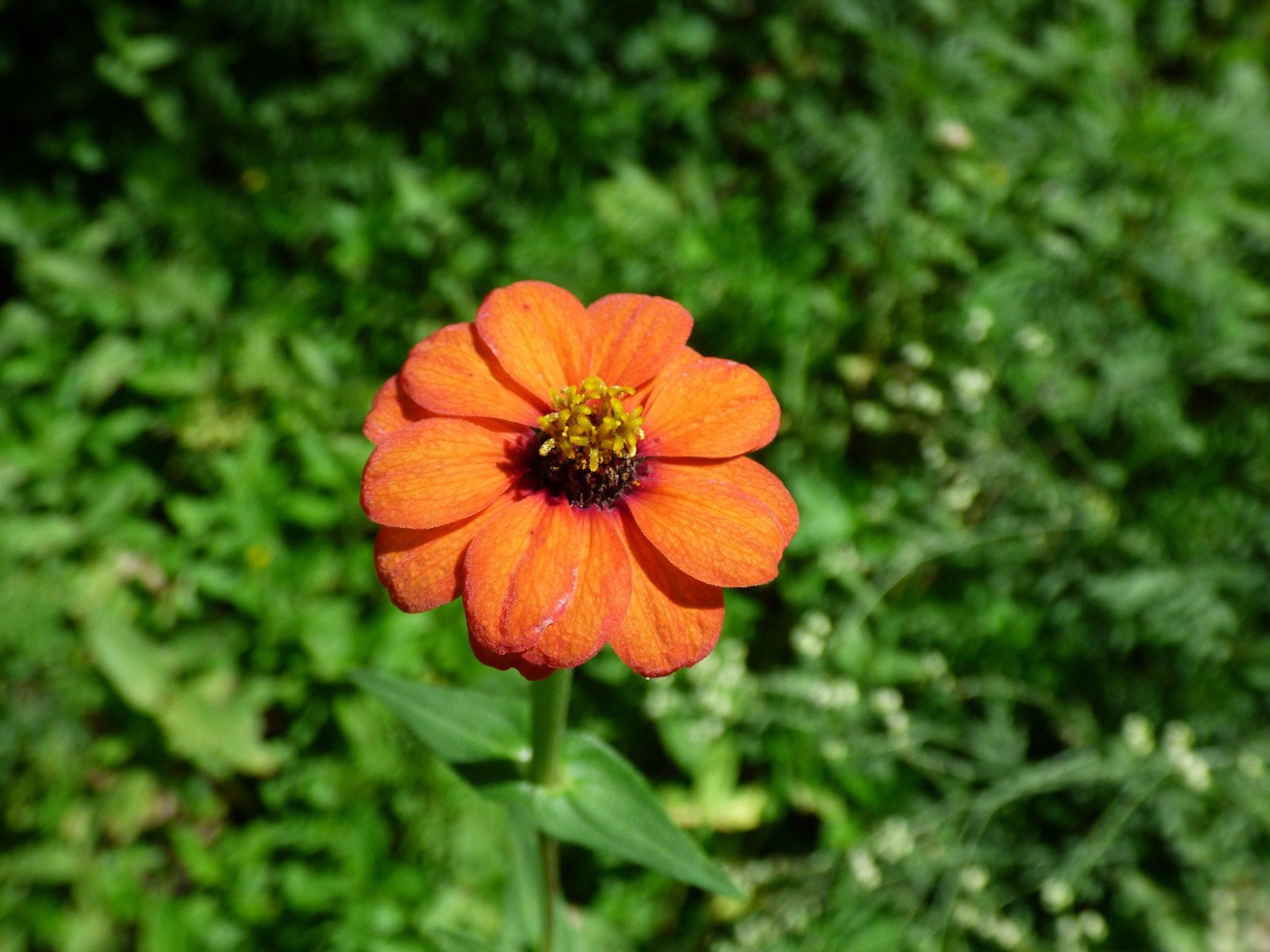 Маленькие оранжевые цветы фото