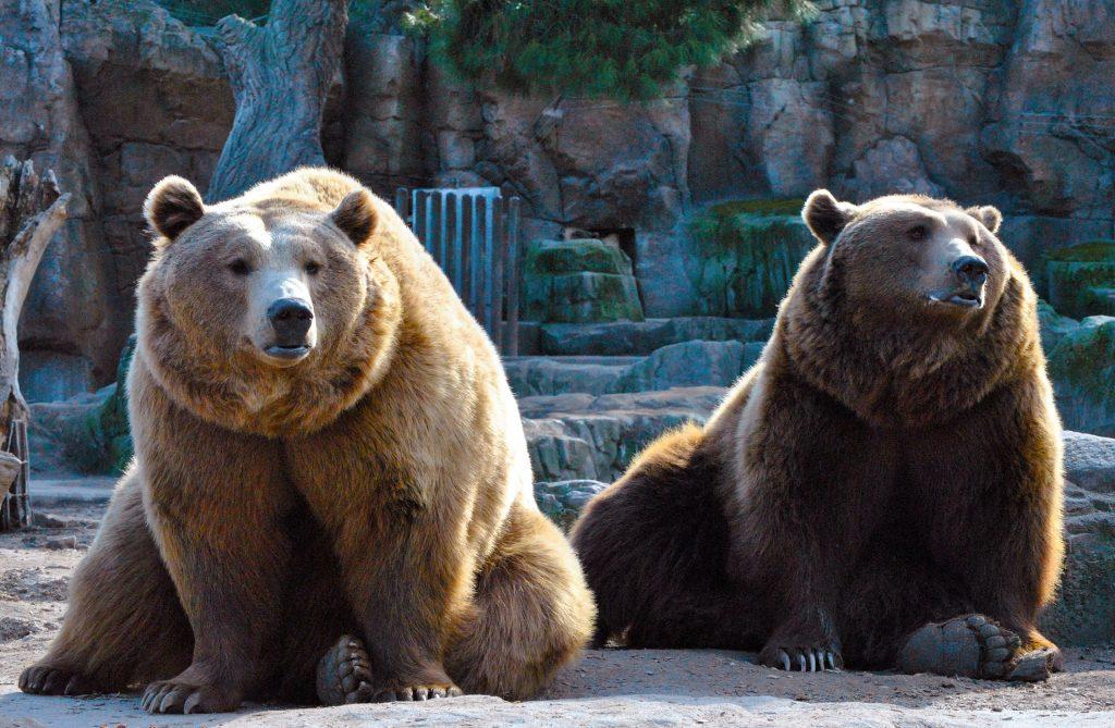熊, 夫妇, 毛皮, 跖行, 动物园, 1707241121