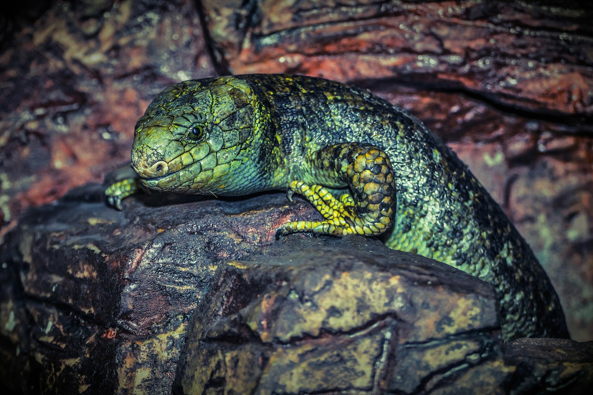 lagarto, reptil, rocas, relax, verde - Fondos de Pantalla HD - professor-falken.com