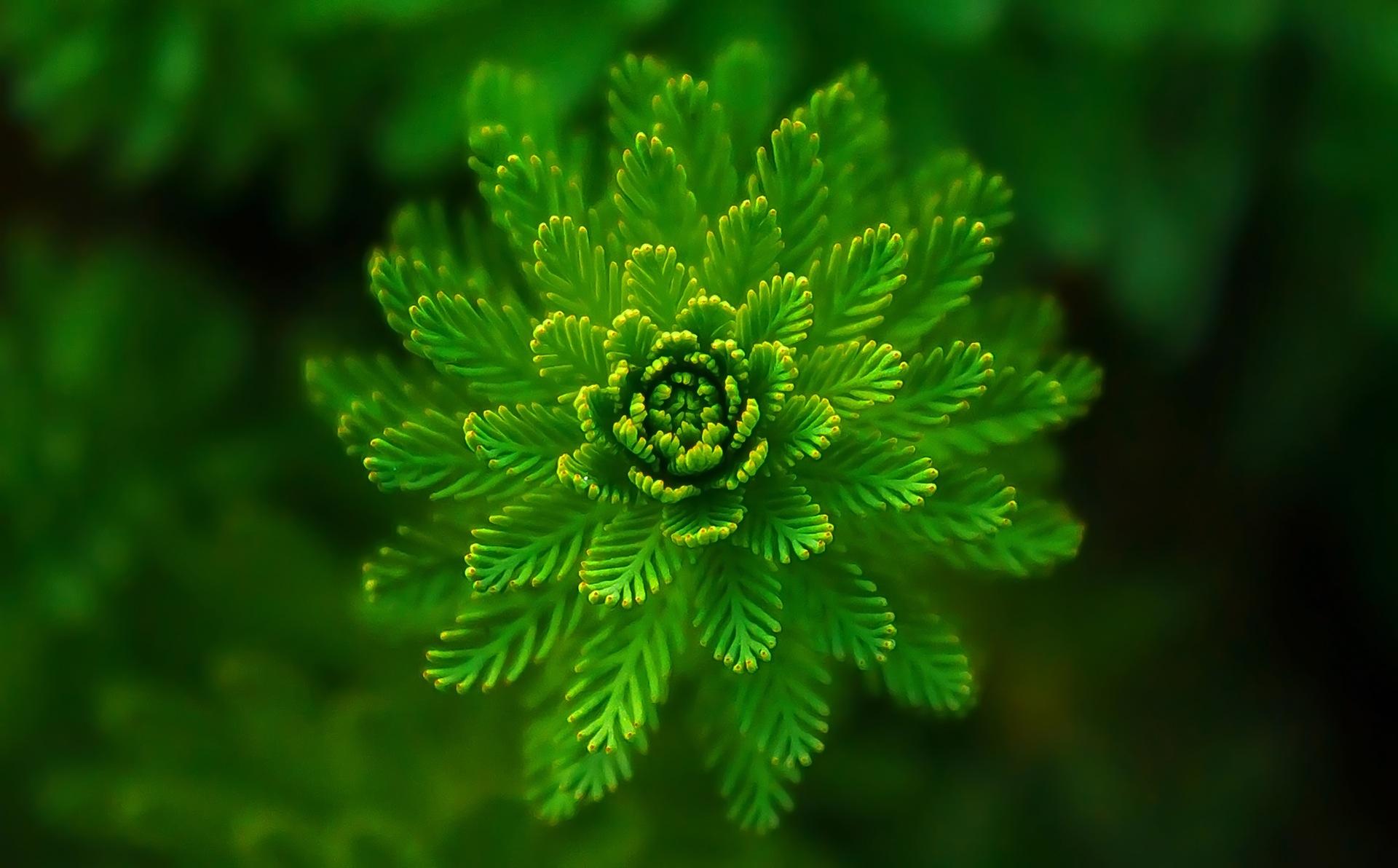 водные растения, Первый этаж, Грин, геометрия, совершенство - Обои HD - Профессор falken.com