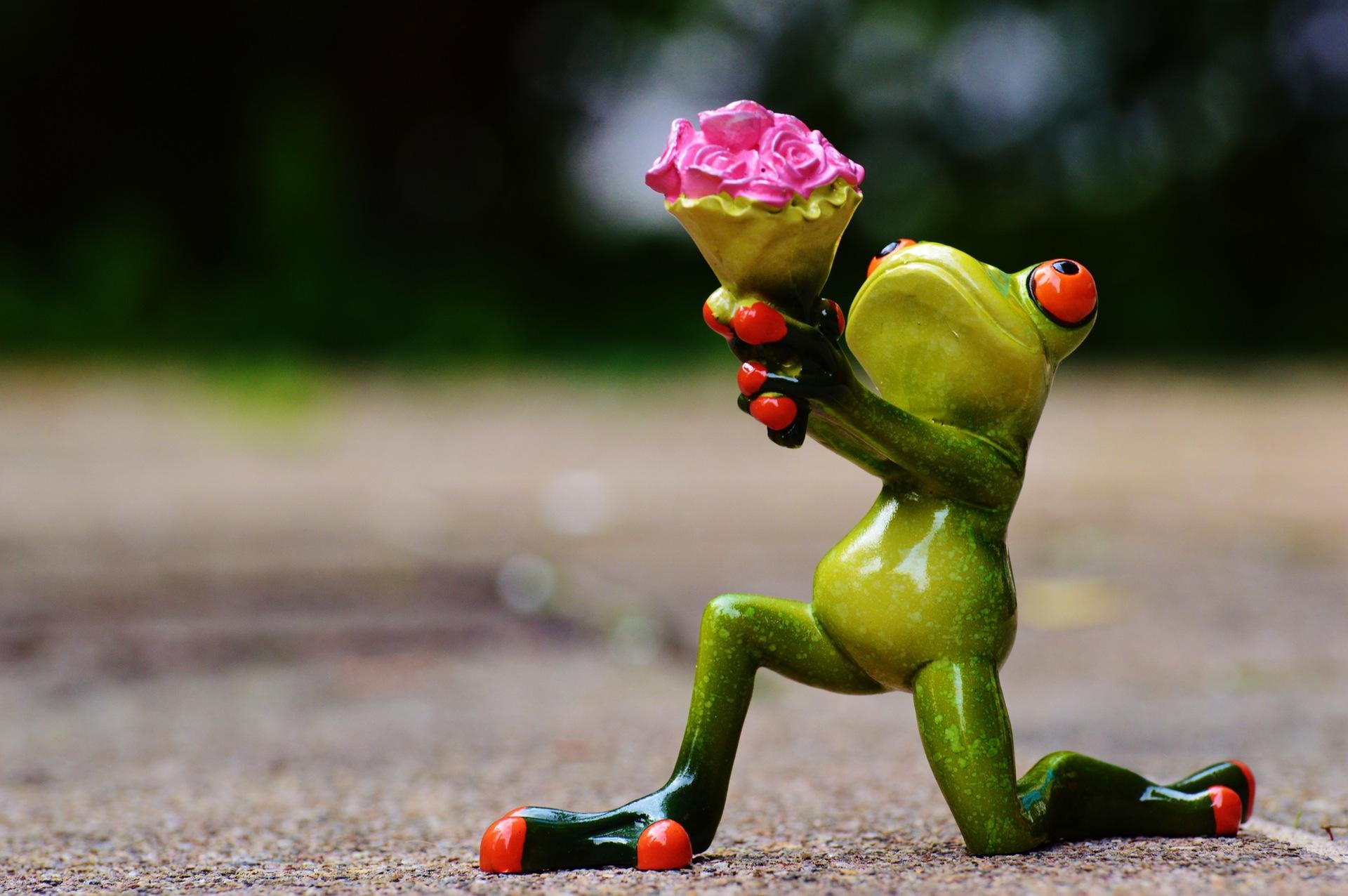 Grenouille, fleurs, amour, pardon, cadeau, Roses, Sweet, sur vos genoux - Fonds d'écran HD - Professor-falken.com