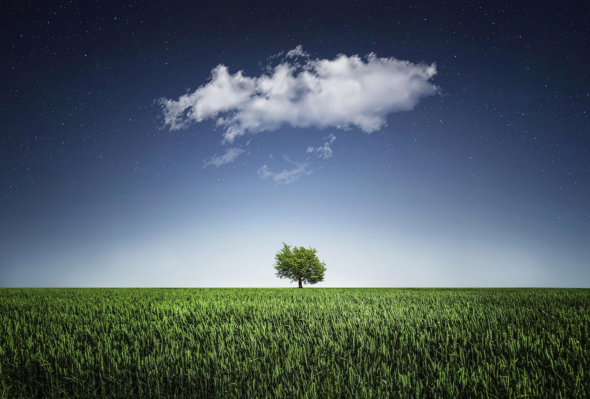 дерево, равнина, Облако, Небо, Соледад - Обои HD - Профессор falken.com