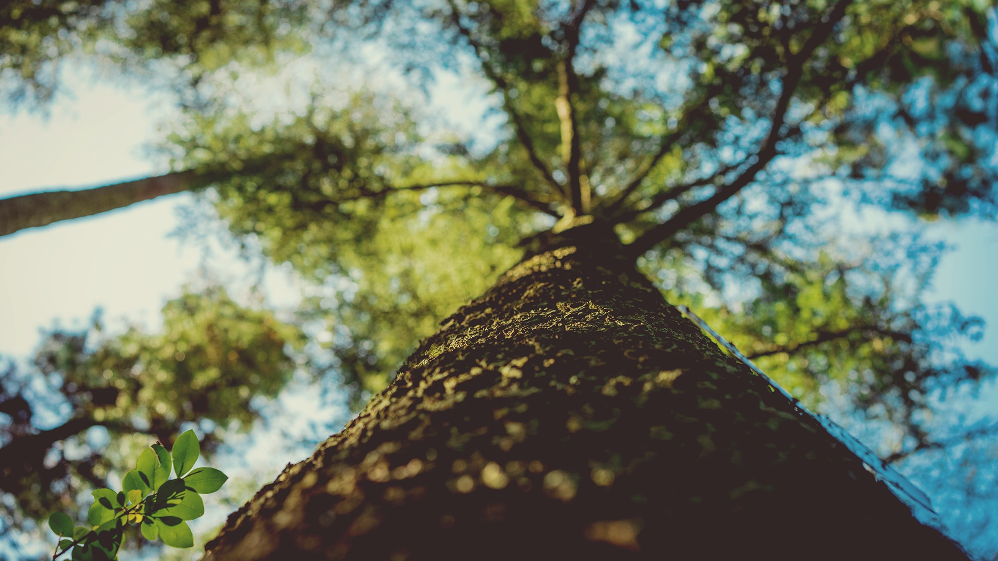 شجرة, الفروع, جذع, أوراق, السماء, تطور - خلفيات عالية الدقة - أستاذ falken.com