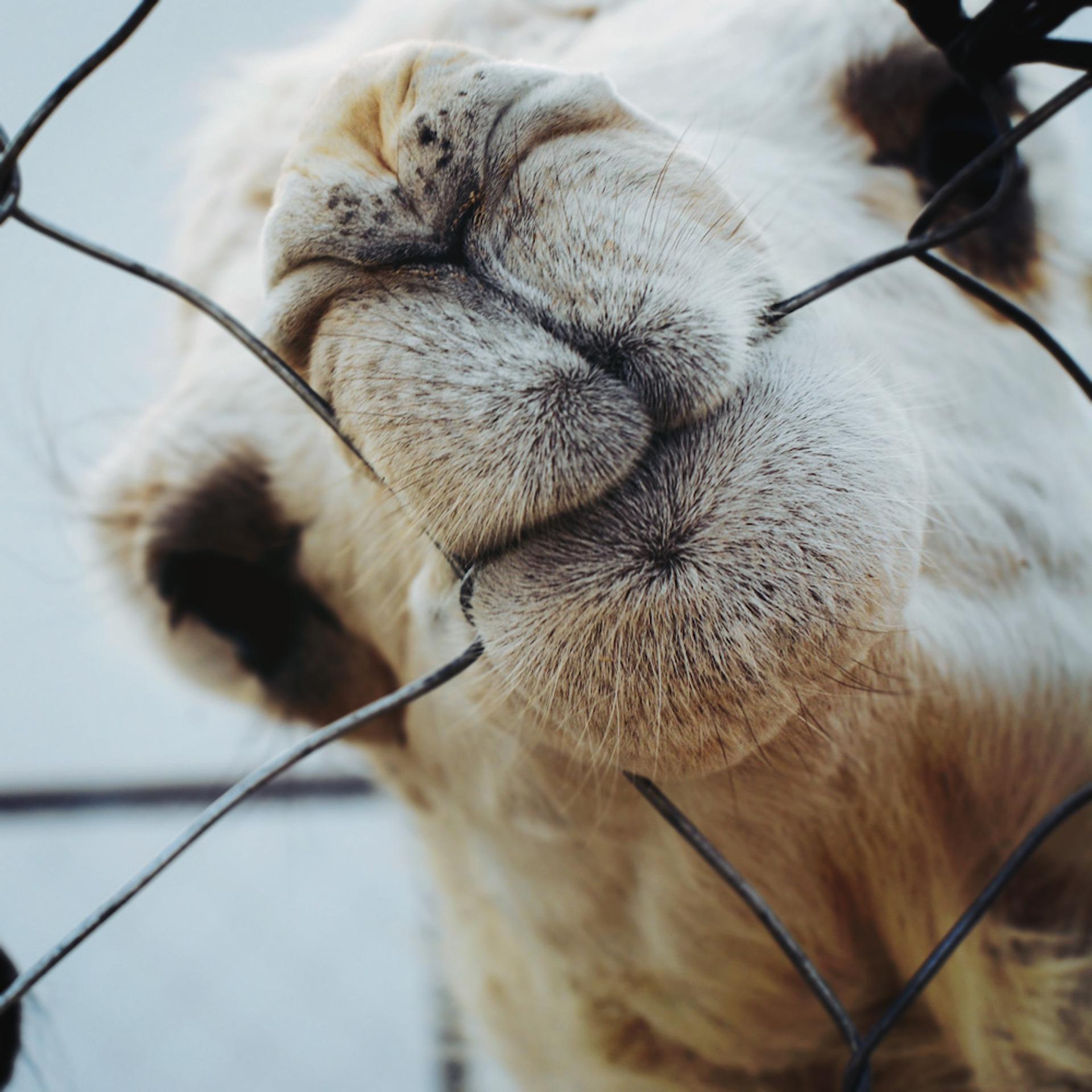 Верблюд, рот, забор, Укус, Снэк - Обои HD - Профессор falken.com