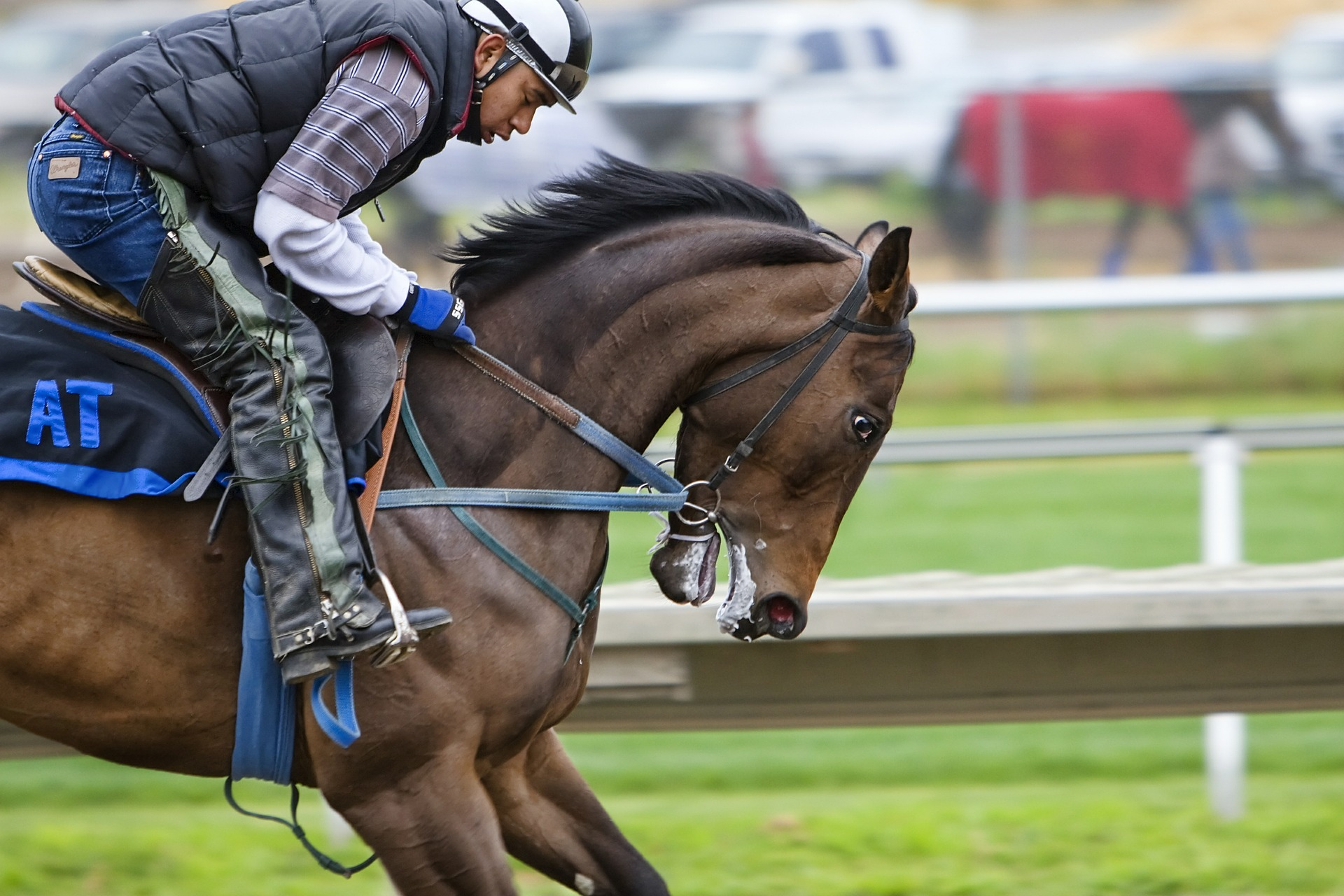 καριέρα, Ελεύθερη/Αθλητική Ιππασία, άλογο, αναβάτη, Πίστα αγώνων - Wallpapers HD - Professor-falken.com