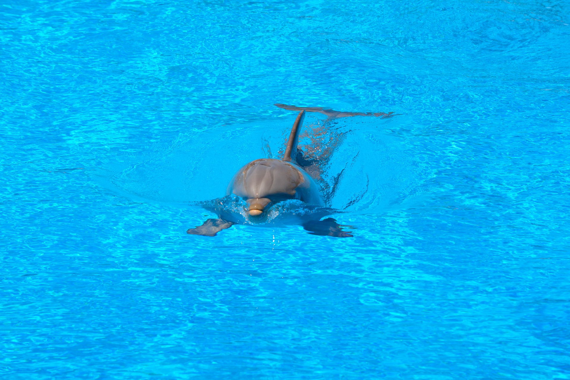 Дельфин, бассейн, воды, плавать, Синий - Обои HD - Профессор falken.com