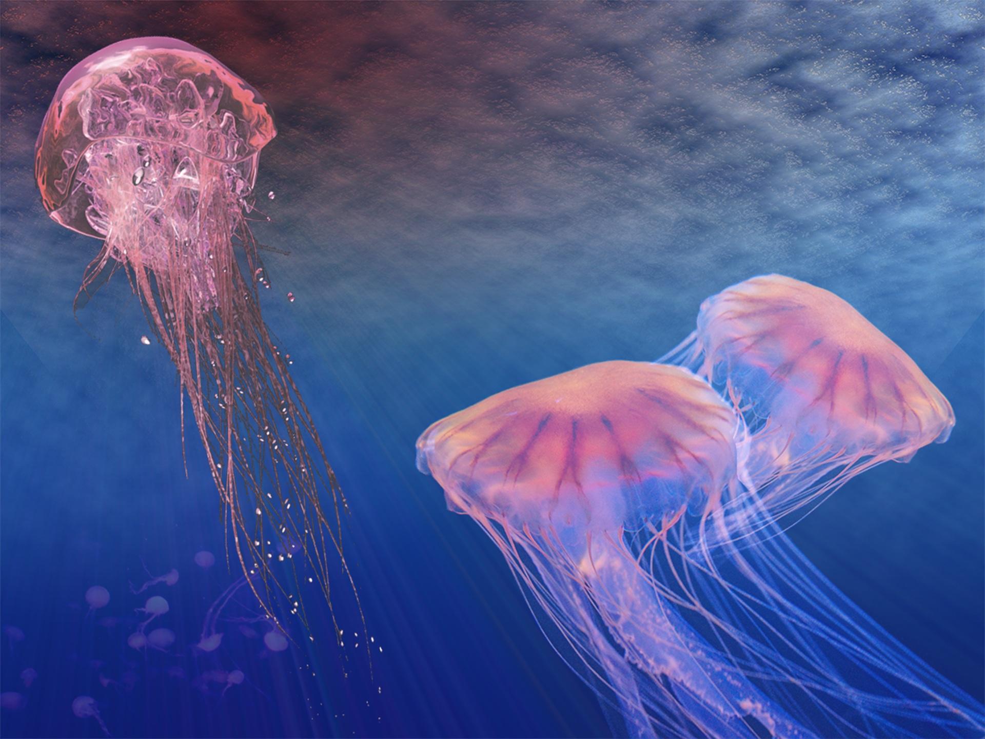 水母, 海洋生命, 海, 海洋, 深度, 罗莎 - 高清壁纸 - 教授-falken.com