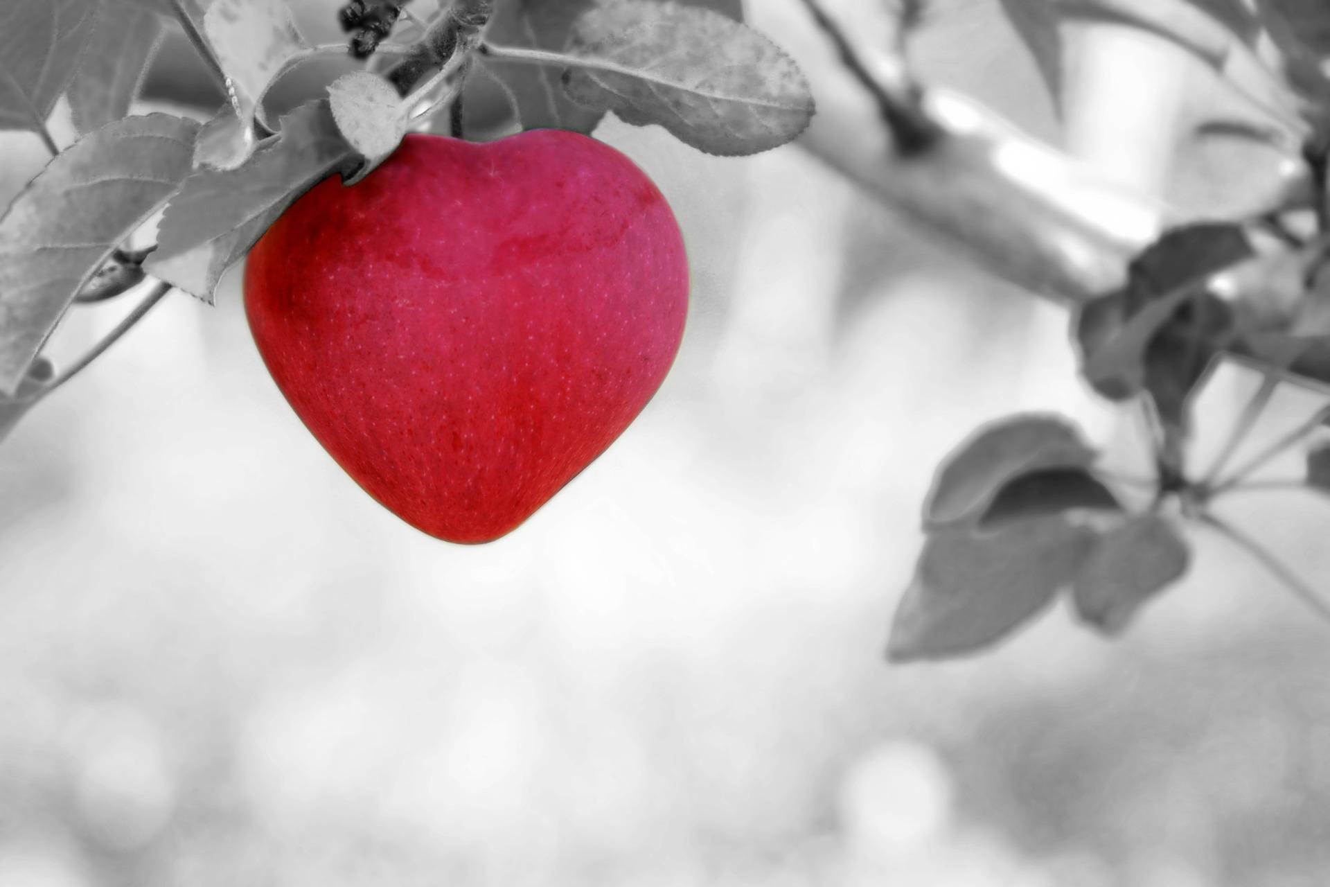 प्यार, दिल, फल, सेब, पेड़ - HD वॉलपेपर - प्रोफेसर-falken.com