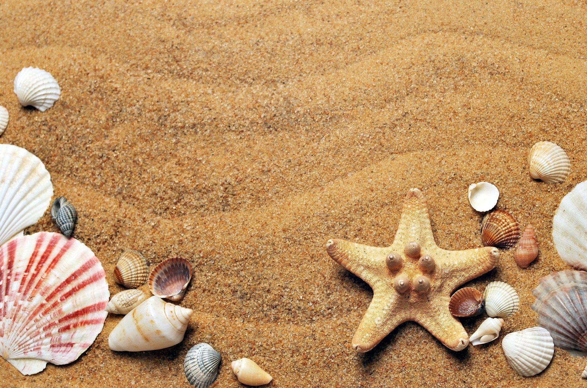 песок, снаряды, Звезда, Море, Пляж - Обои HD - Профессор falken.com