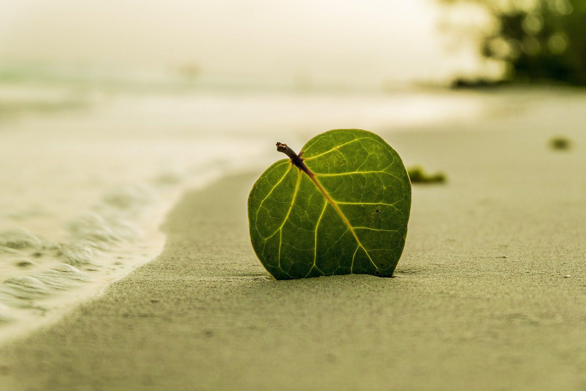φύλλο, Παραλία, Άμμος, Ένωση, Θάλασσα - Wallpapers HD - Professor-falken.com