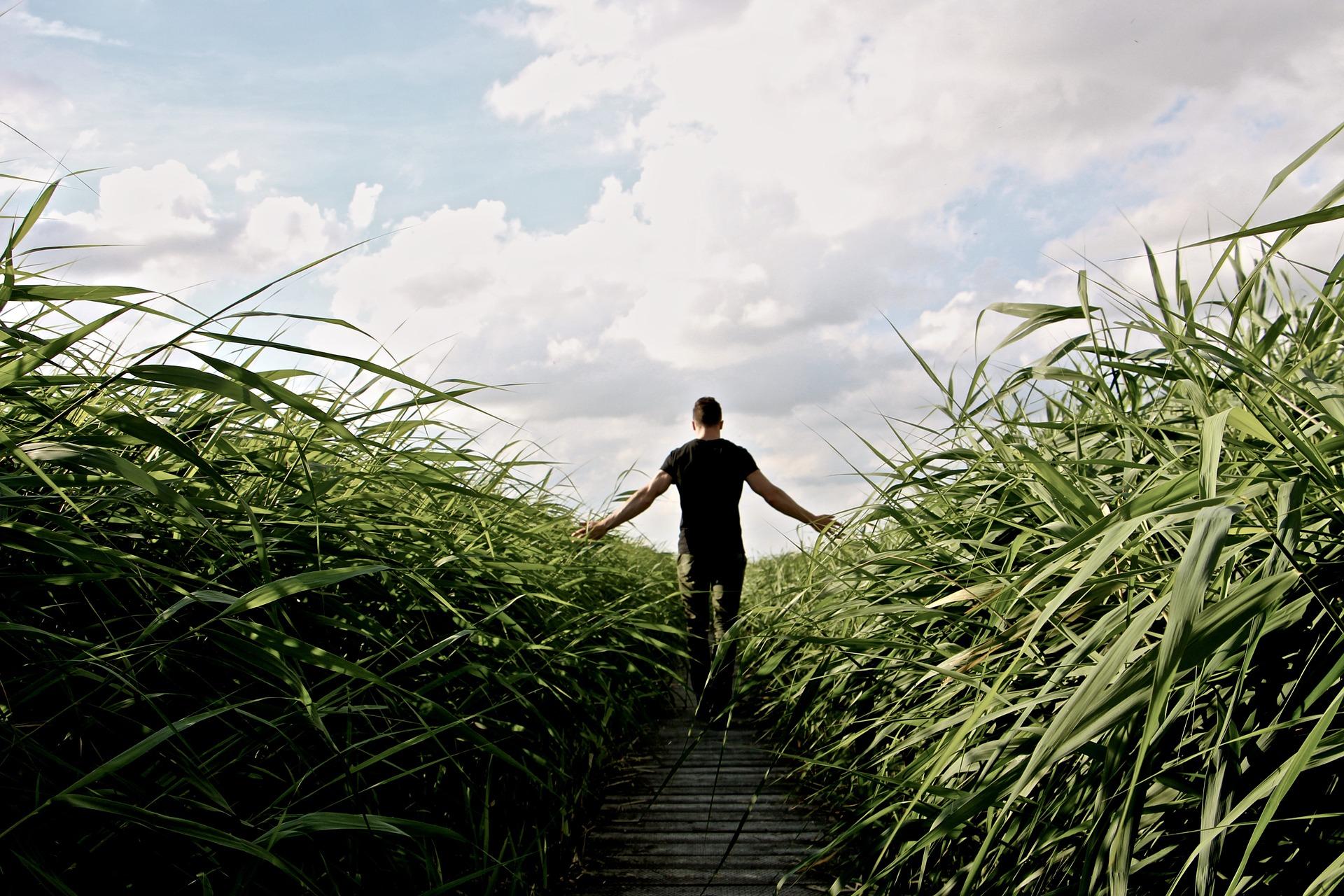 человек, ПРАДО, поле, трава, расслабиться - Обои HD - Профессор falken.com