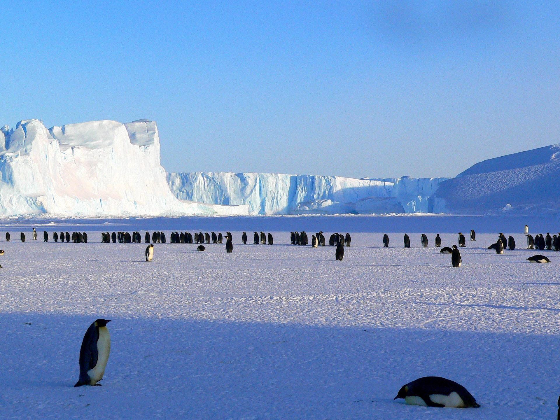 πιγκουίνοι, Αυτοκράτορας, antartida, πάγου, Polar - Wallpapers HD - Professor-falken.com