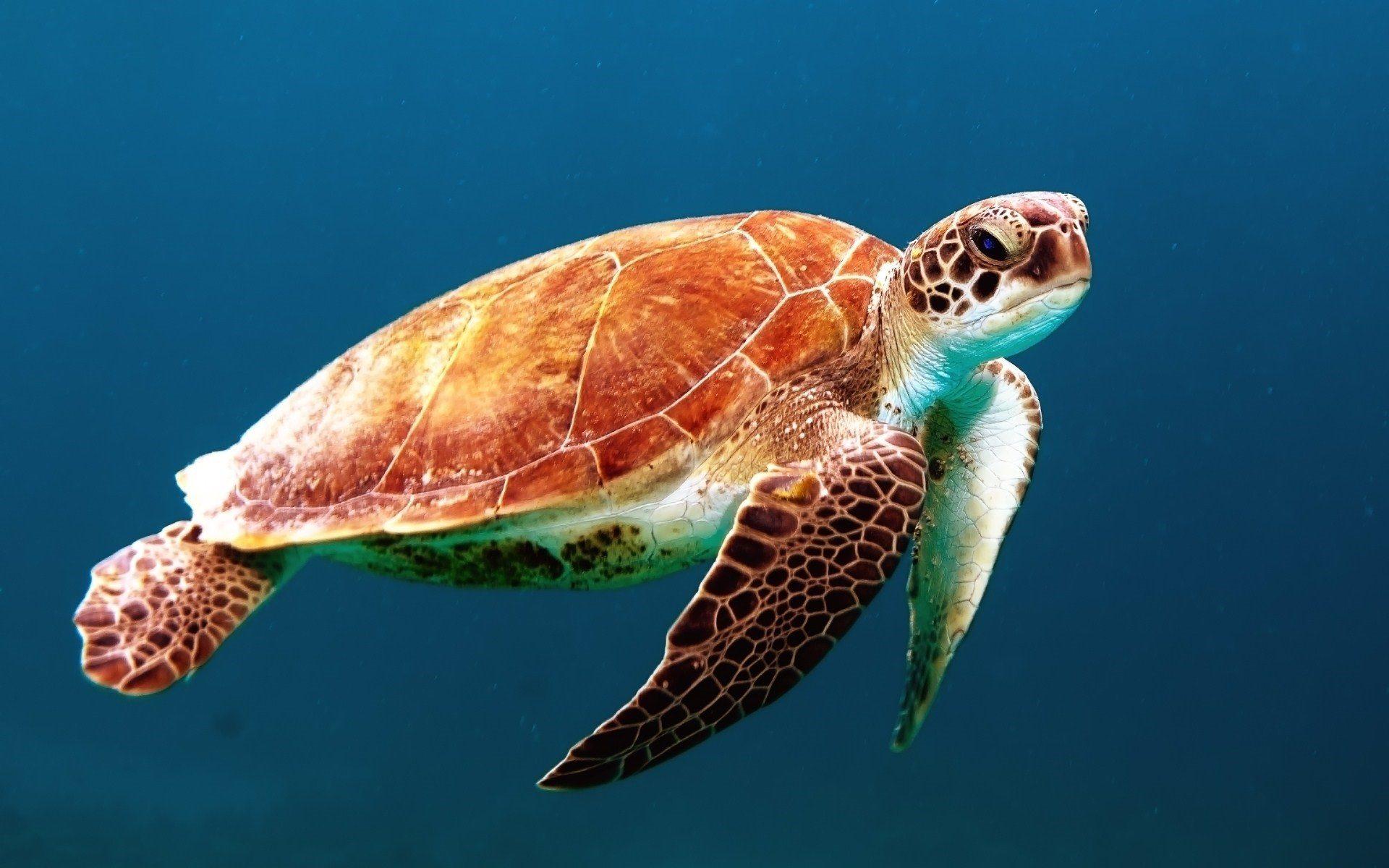 Schildkröte, Marina, Ozean, Unterwasser, bunte - Wallpaper HD - Prof.-falken.com