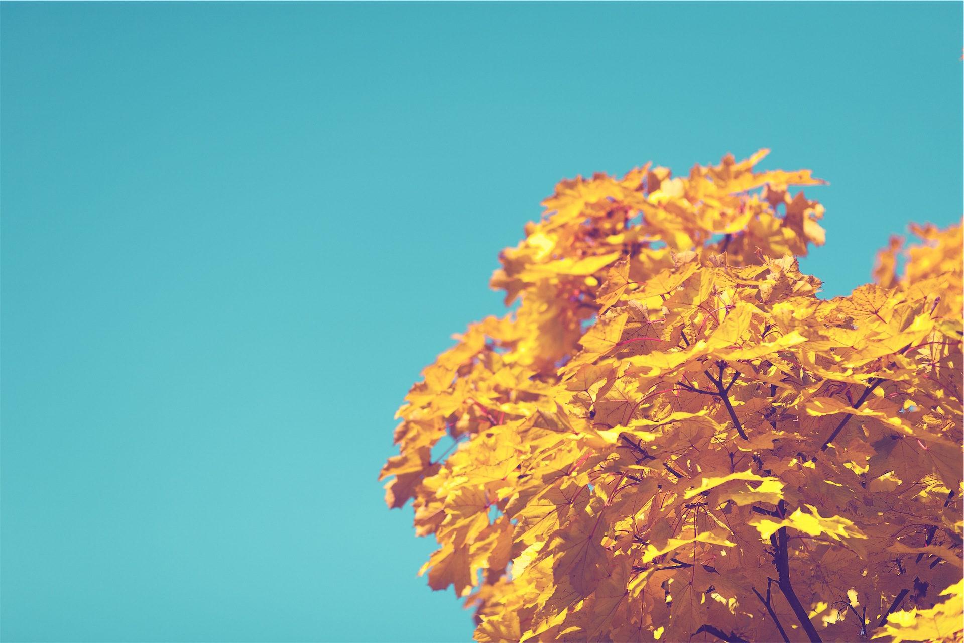 árbol, rama, hojas, secas, otoño - Fondos de Pantalla HD - professor-falken.com