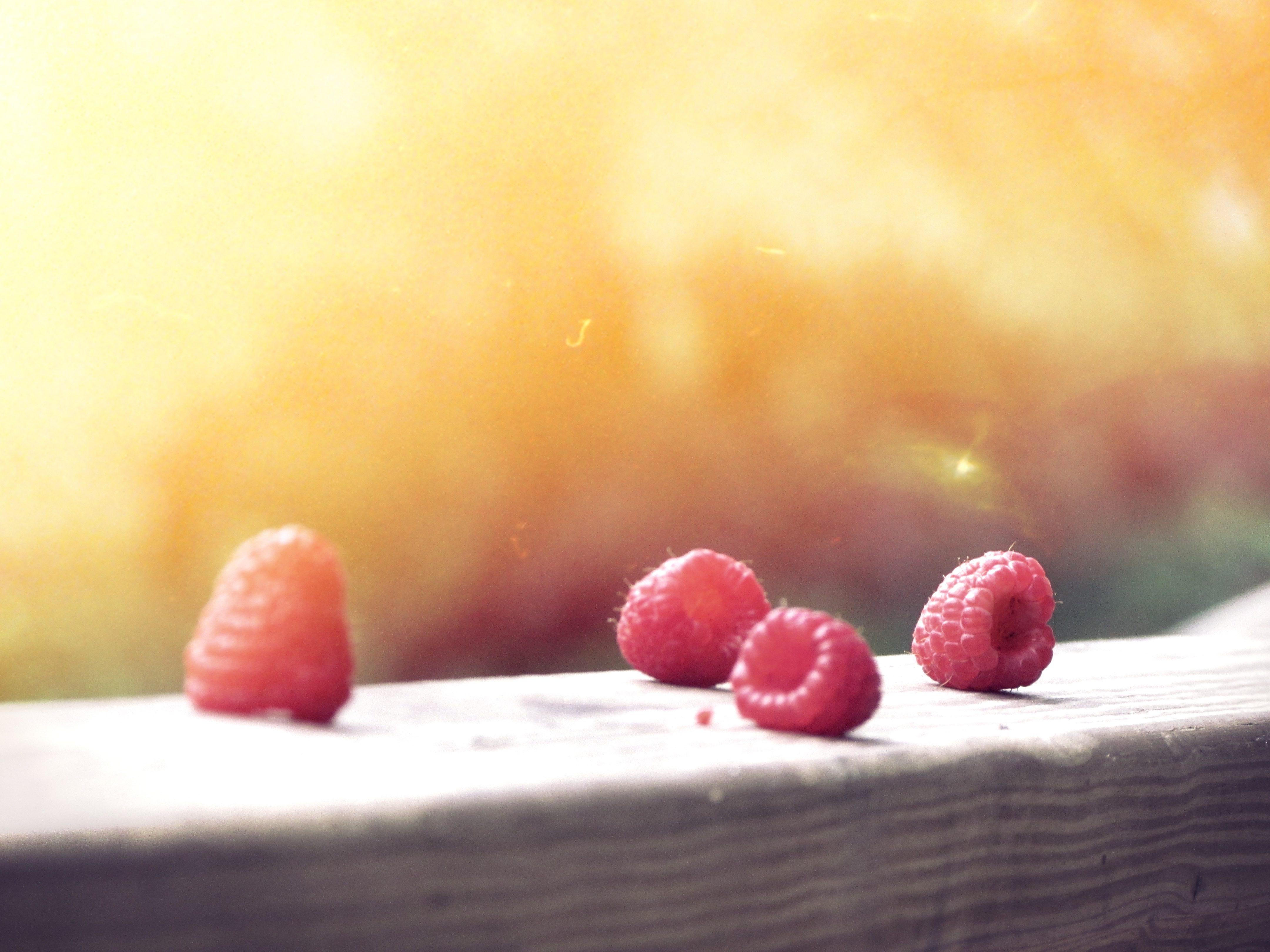 bleuets, bois, fruits, Sun, luminosité - Fonds d'écran HD - Professor-falken.com